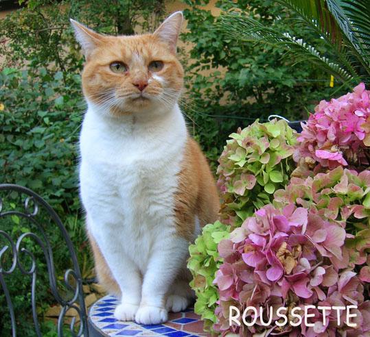 Roussette_1.jpg